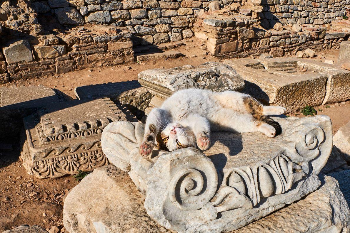 Um gato se estica sob o sol em ruínas na Turquia. Islã é a religião predominante ...