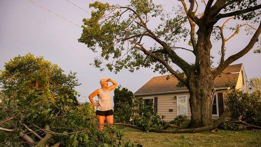 Como essa cidade planeja recuperar a perda da maioria de suas árvores