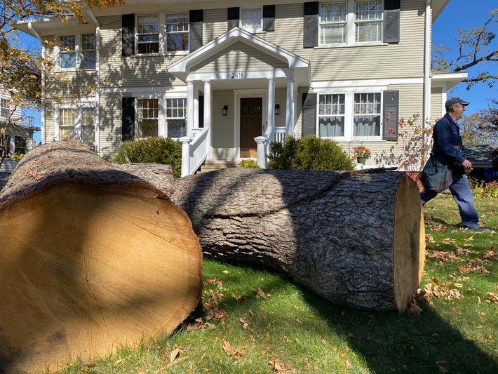 Milhares de árvores bloquearam ruas e calçadas após a tempestade, dificultando a comunicação e a mobilidade. ...