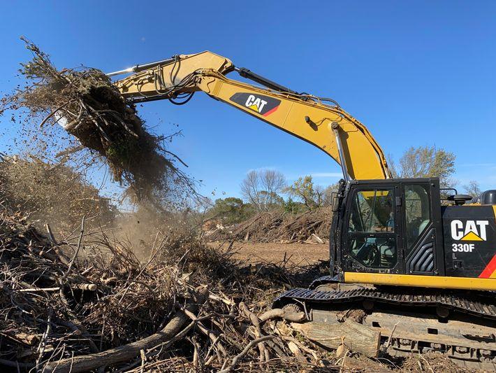 Após o fenômeno derecho, equipes da cidade limparam os destroços de árvores durante todos os dias ...