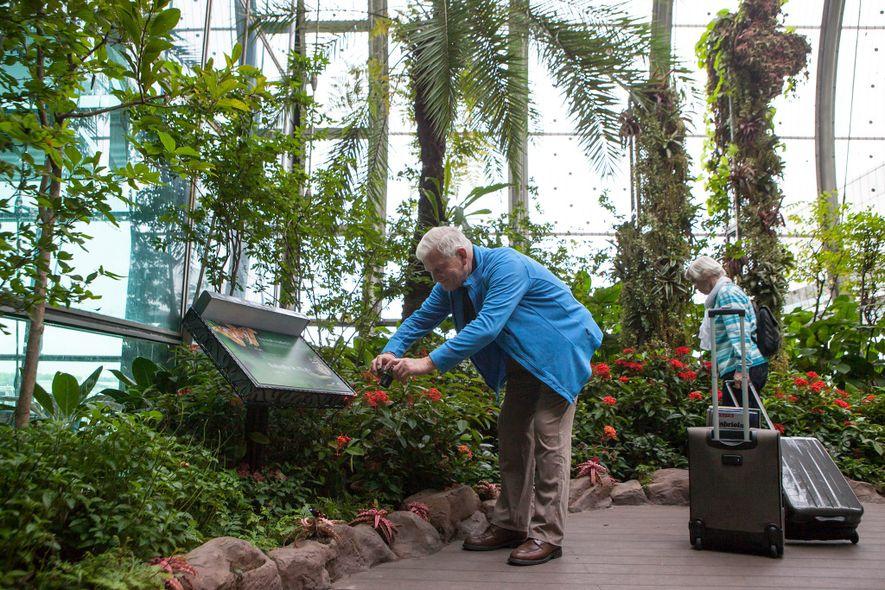 Visitante aprecia jardim de borboletas no Aeroporto Changi, em Singapura. Como grandes aeroportos ao redor do ...