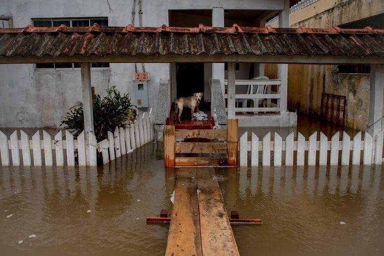 Moradores da cidade de Careiro da Várzea, município do Amazonas, tiveram que adaptar suas casas com ...
