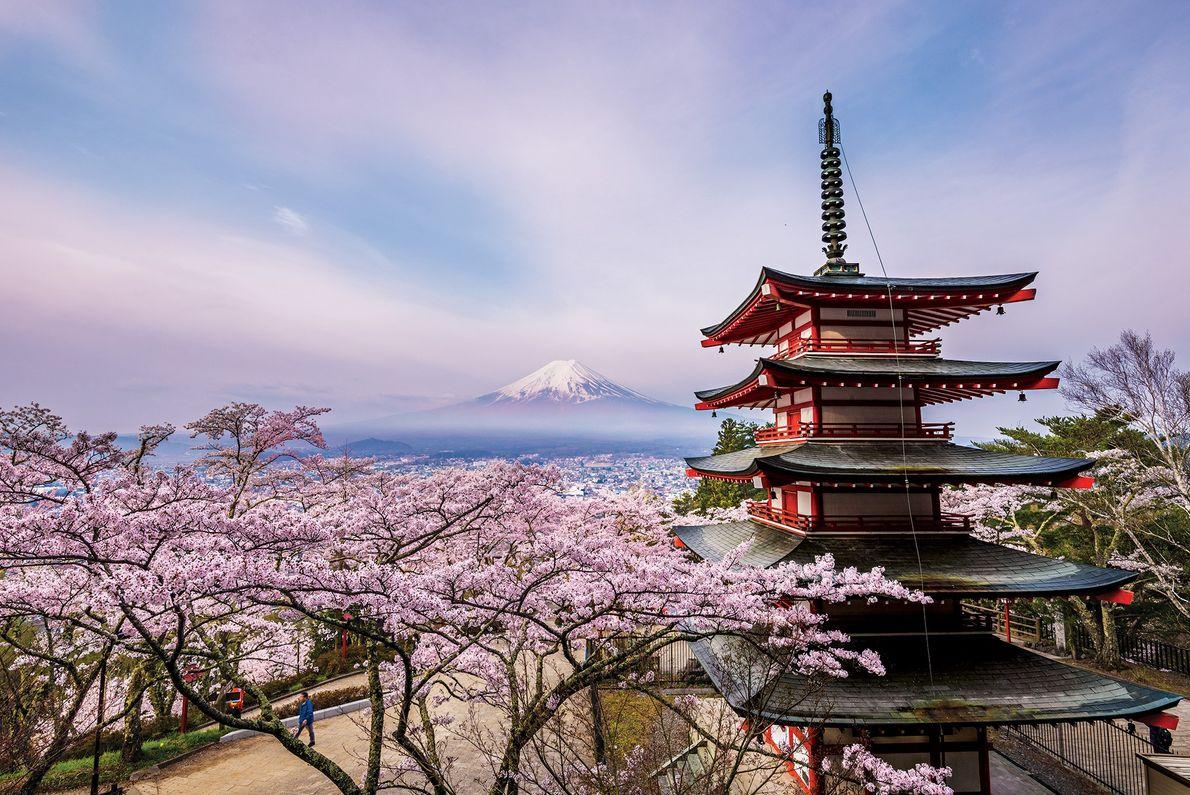 A foto vencedora foi tirada durante a época da cerejeira, com o Monte Fuji emoldurado por ...