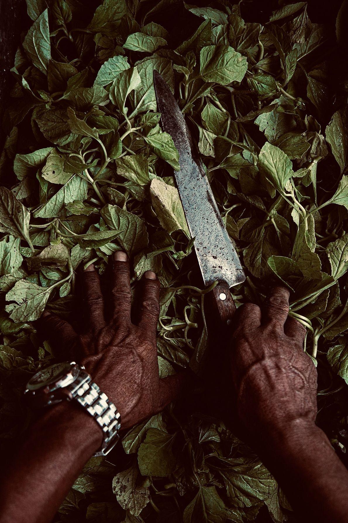 Foto de homem manuseando com faca folhas de jambu