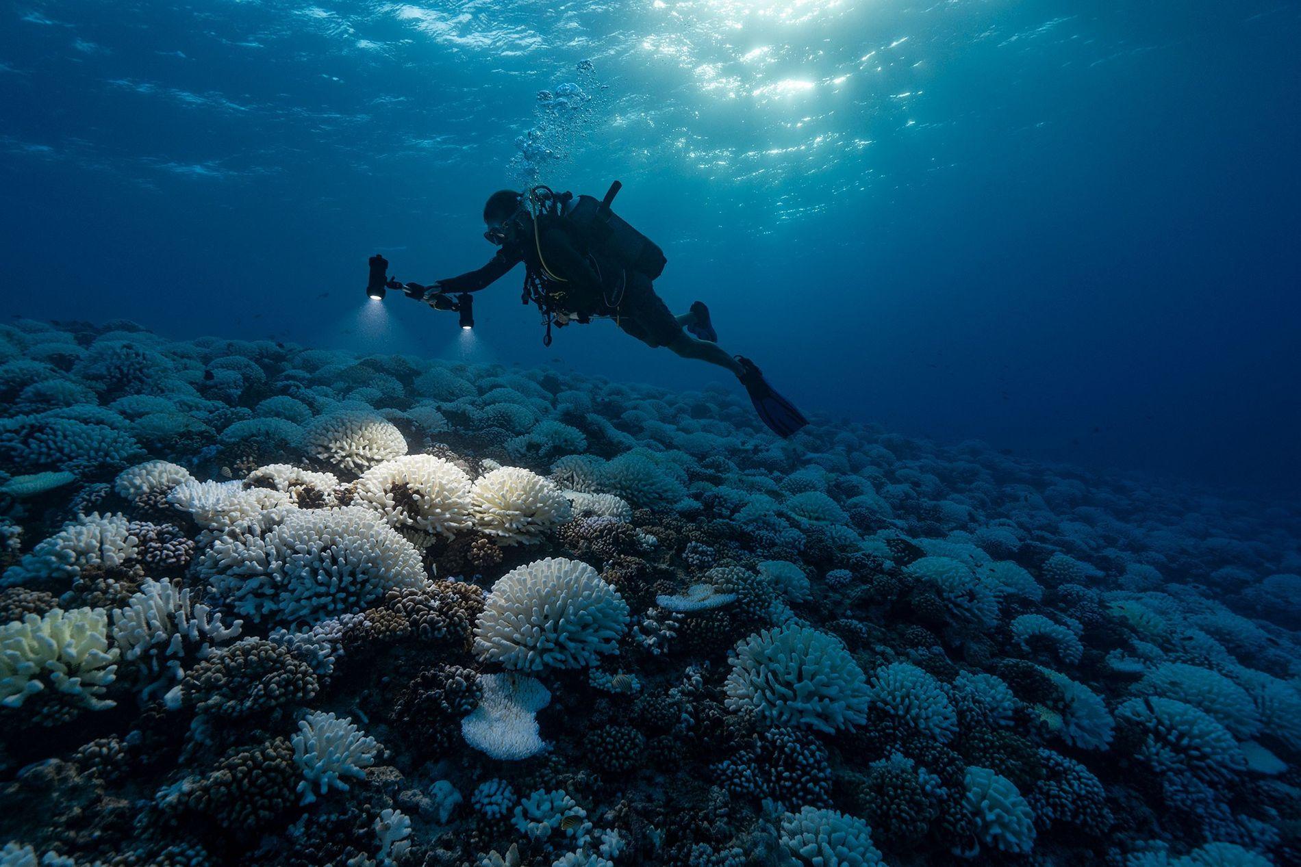 Os oceanos e os corais estão sob estresse extremo devido às mudanças climáticas e podem ter ...