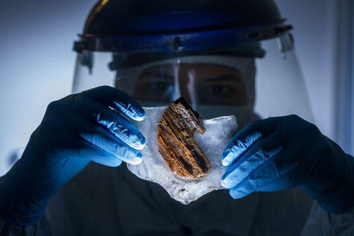 A cientista forense Frankie West examina amostras de madeira do porão do navio na esperança de ...