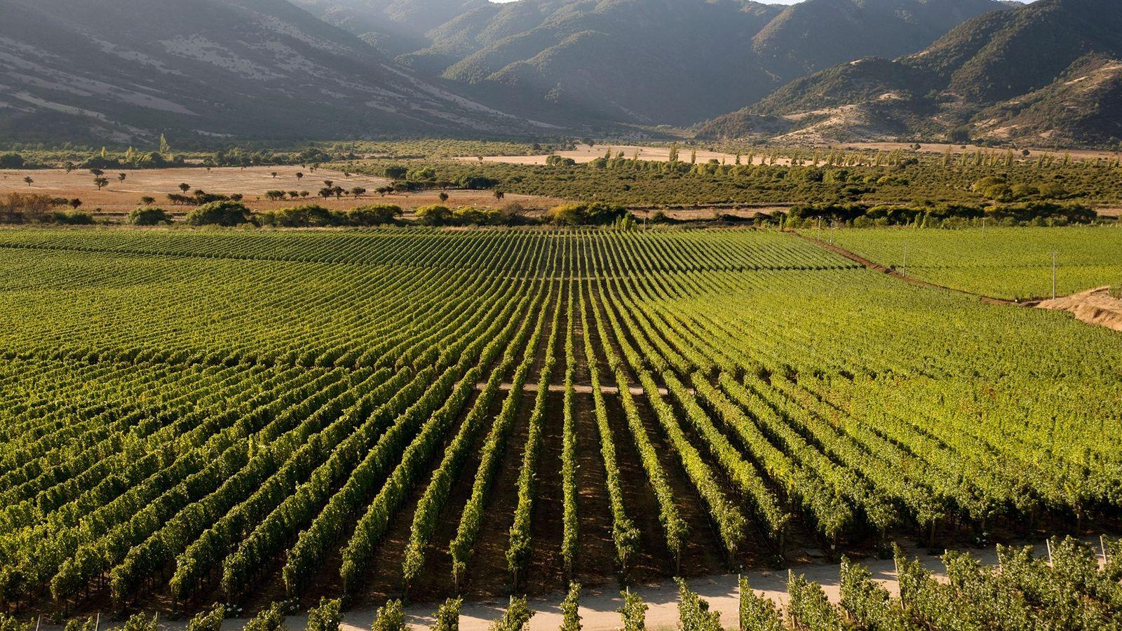 O belo Vale do Colchagua, no Chile, é famoso por seus vinhos tintos vibrantes.
