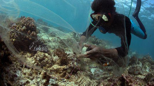 Como peixes exóticos de recifes de coral vão parar em aquários