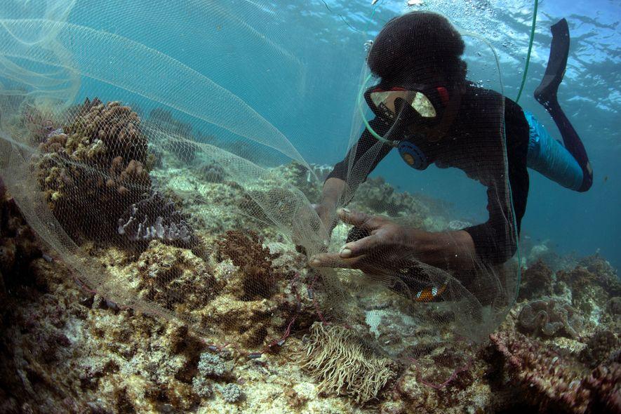 Respirando por uma mangueira de plástico conectada a um compressor de ar, este experiente pescador da …