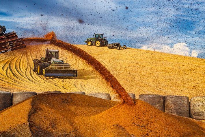 Tratores juntam um monte enorme de milho em uma propriedade rural perto de Imperial, Nebraska, antes ...