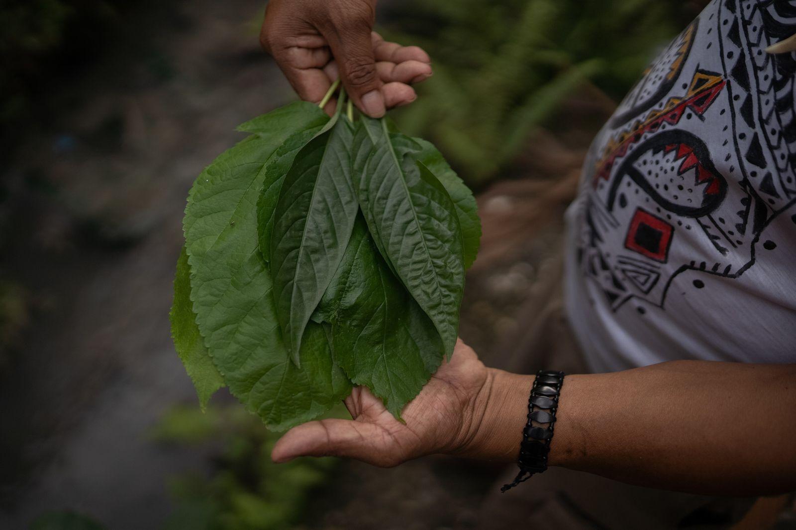Indígenas recorrem à medicina tradicional no tratamento contra a covid-19
