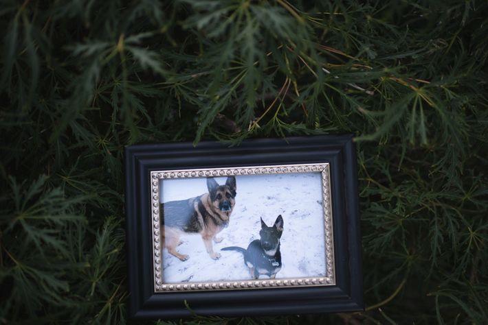 Uma foto de família mostra Buddy e Duke, de 10 meses, no início do ano. O ...