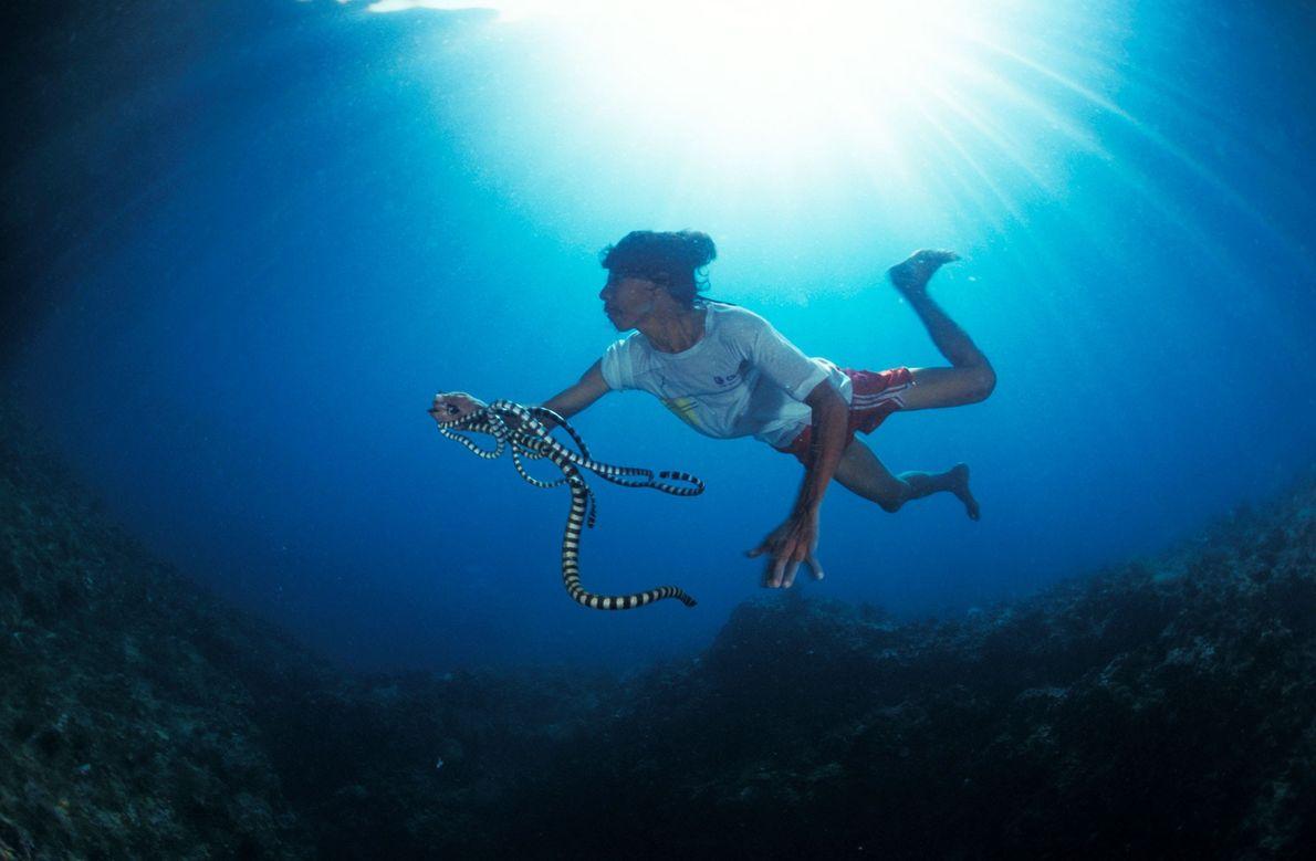 Um pescador das Filipinas captura uma cobra debaixo d'água perto da ilha Gato.