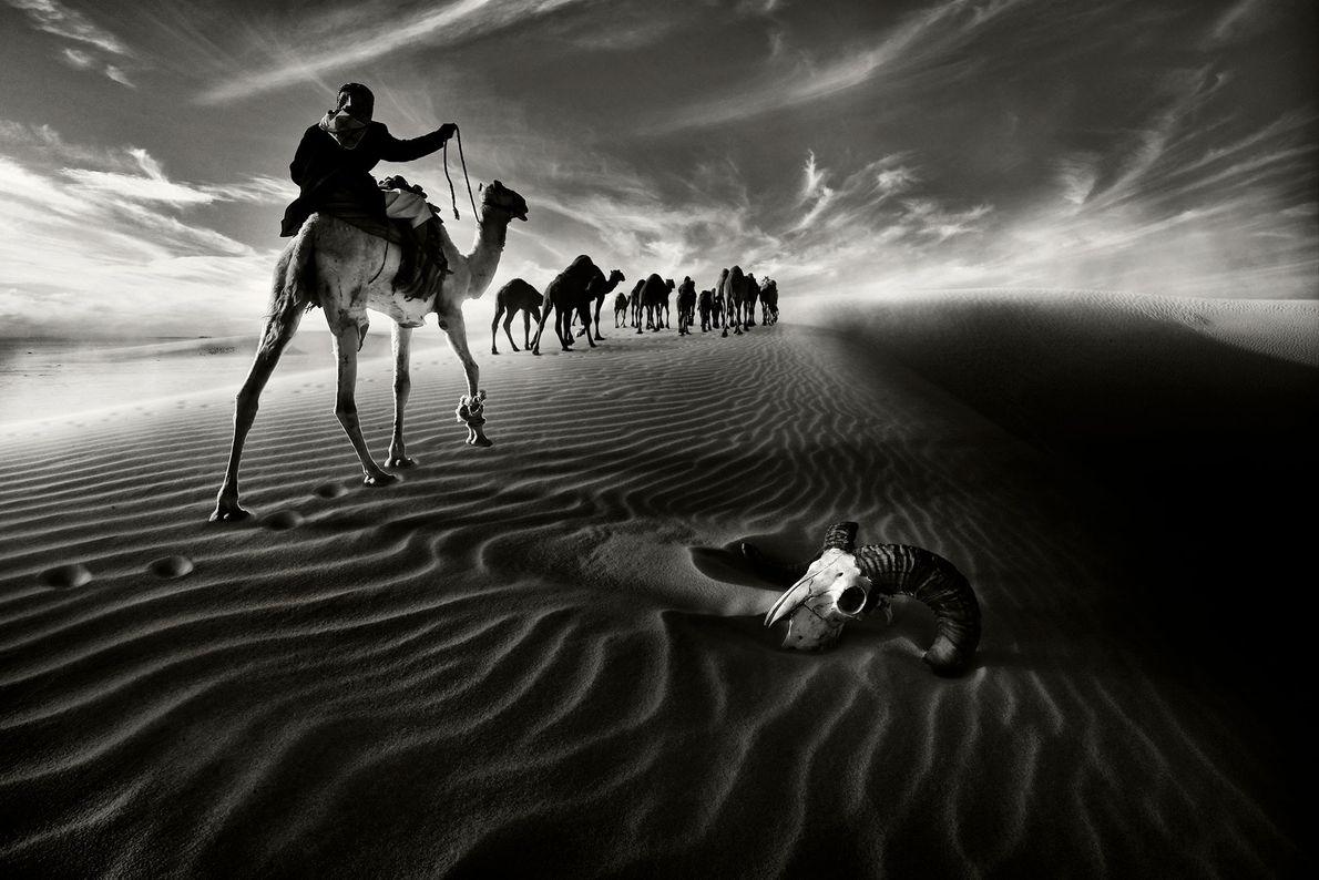 Viajantes passam pela caveira de um animal enquanto andam sobre camelos pelo norte do Kuwait.