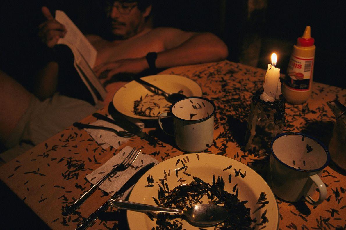 Cupins andam sobre uma mesa de jantar em uma tenda no parque nacional de Madidi, na ...