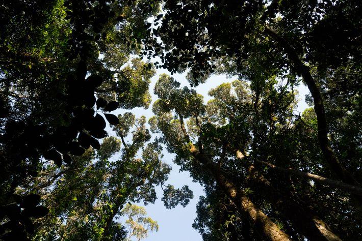 Muitos dos lêmures de Madagascar, animais não encontrados em nenhum outro lugar do mundo, passam a ...