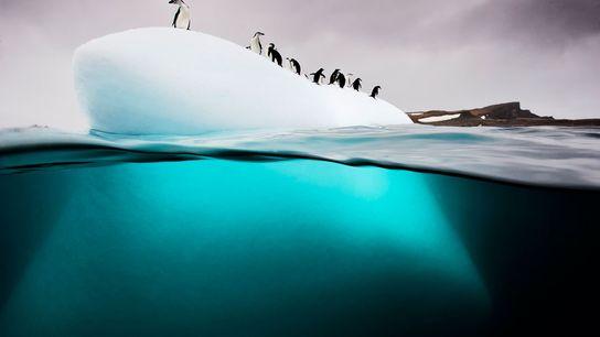 Um grupo de pinguins-de-barbicha e pinguins-gentoo descansam sobre um pequeno iceberg próximo à Ilha Danco, na ...
