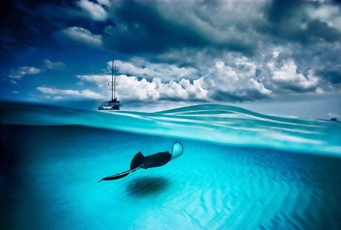 Uma raia e um barco a vela podem ser vistos em North Sound, Grand Cayman. Este ...