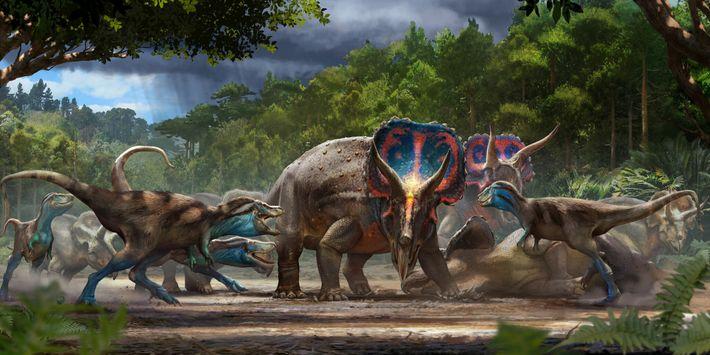 """O fóssil """"Duelo de Dinossauros"""" talvez represente uma batalha fatal entre um tricerátops e um tiranossauro jovem, ..."""