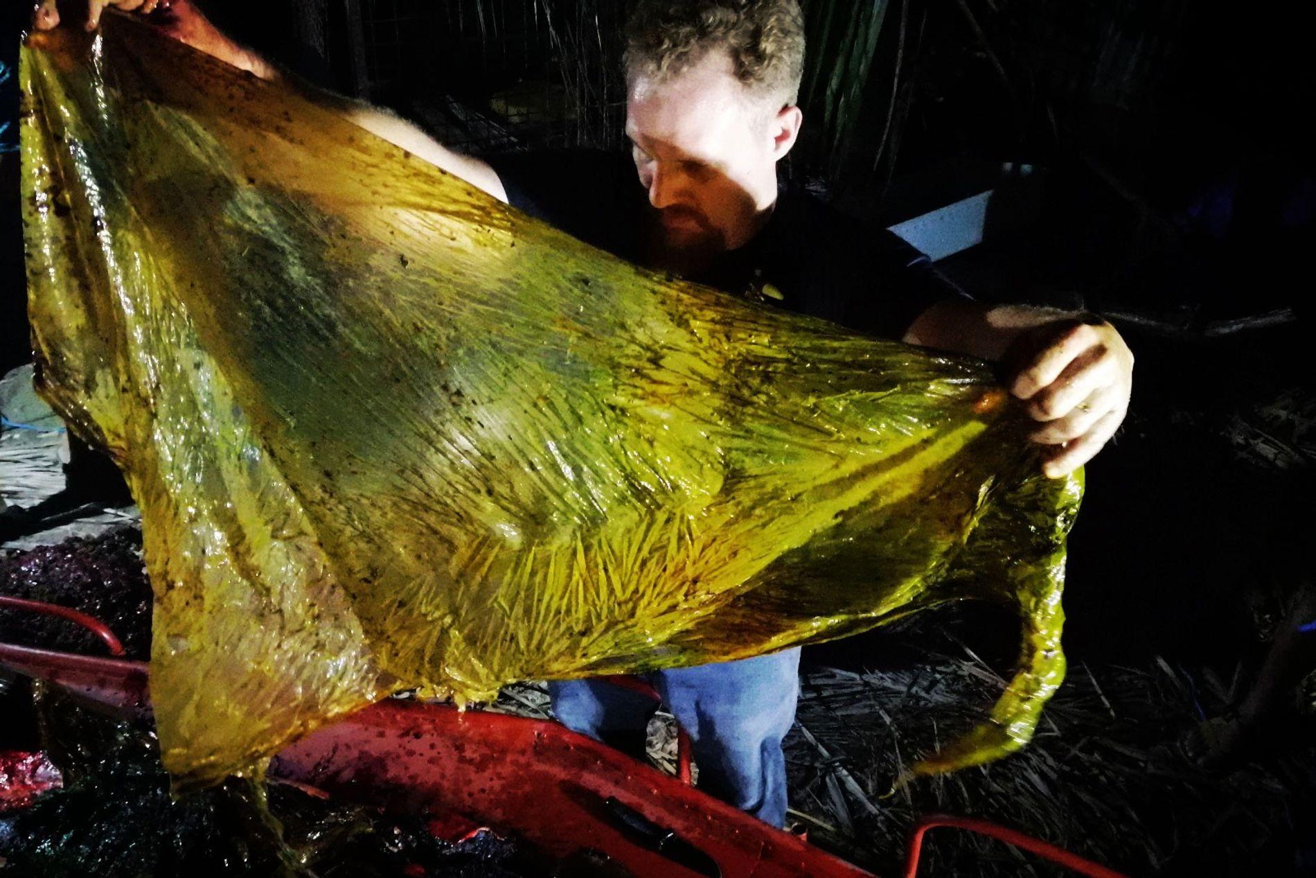 Os pesquisadores tiraram cerca de 45 kg de resíduos plásticos do estômago de uma jovem baleia-bicuda-de-cuvier ...
