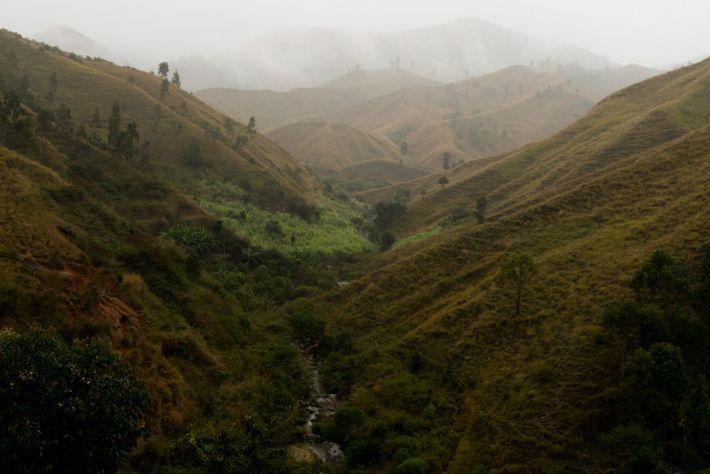 O desmatamento ameaça a biodiversidade espetacular da ilha, crucial à indústria do turismo que gera quase ...