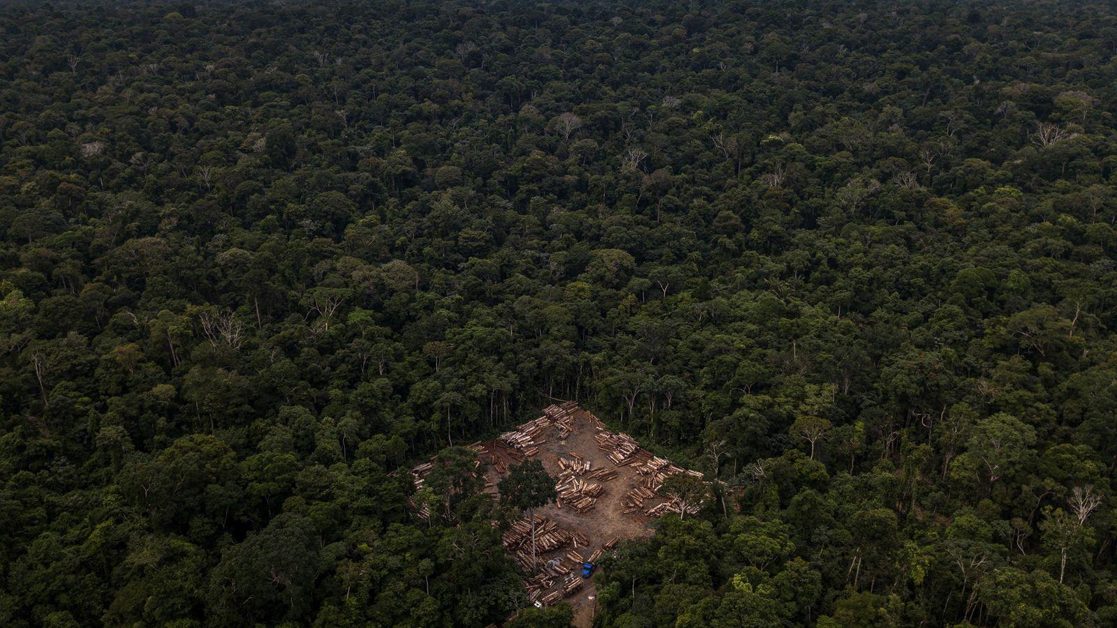 Trecho de floresta é primeiro desmatado para retirar madeiras que podem ser comercializados. Depois, a área ...