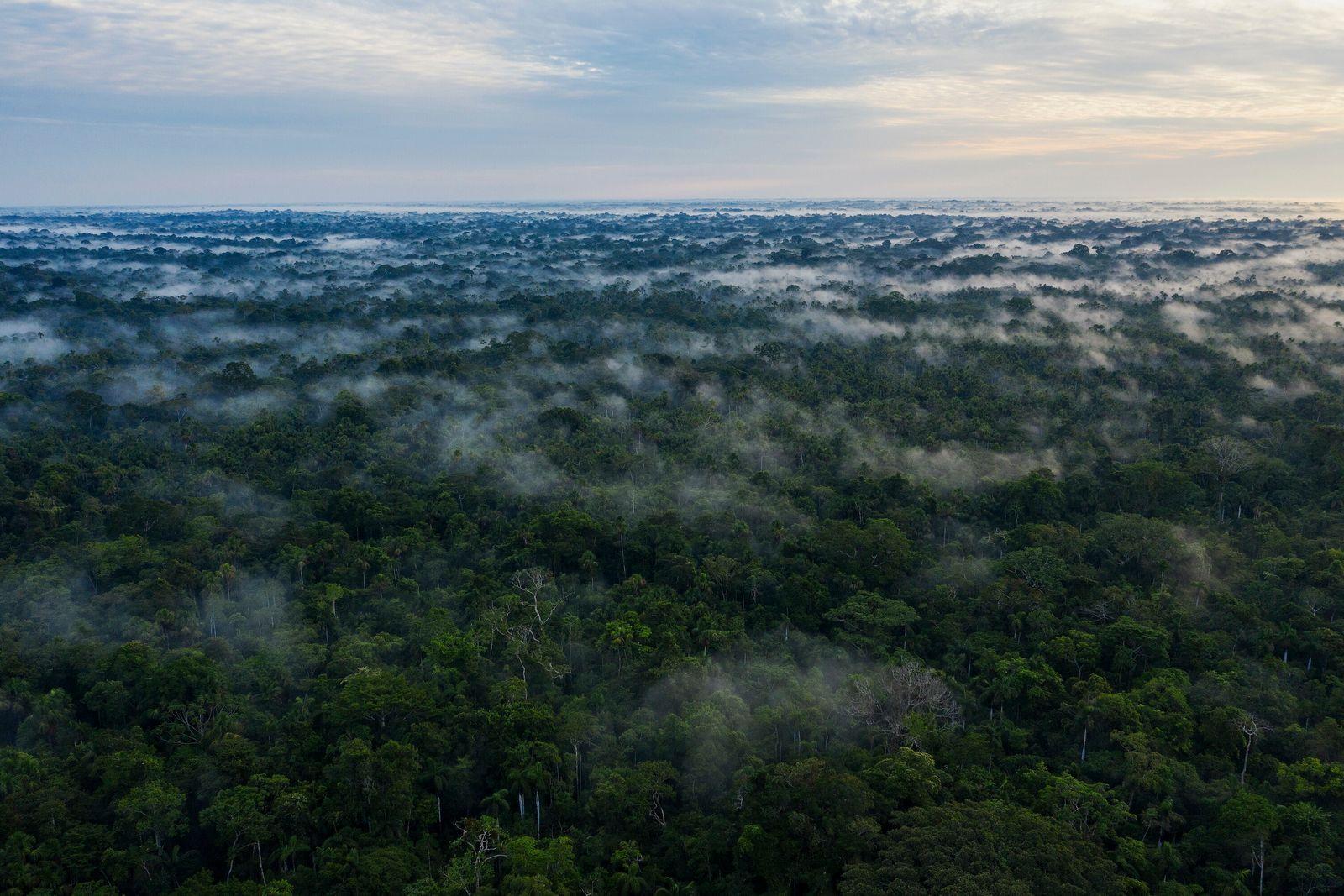 foto aérea da floresta amazônica