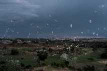 revoada de pássaros brancos em zona de recente urbanização