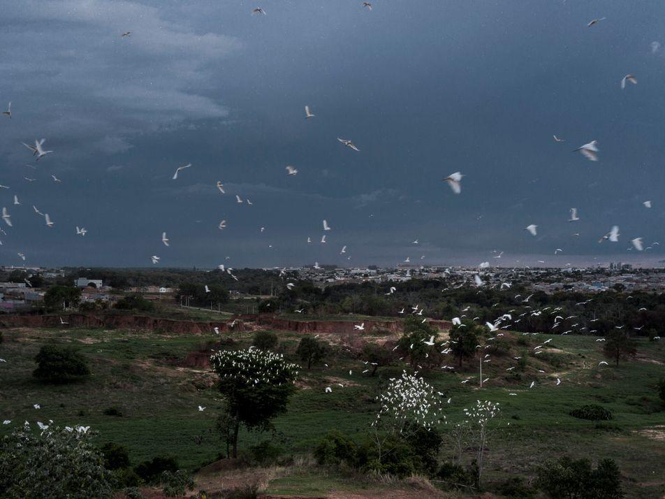 Berço de doenças, parte devastada da Amazônia enfrenta covid-19, dengue e malária
