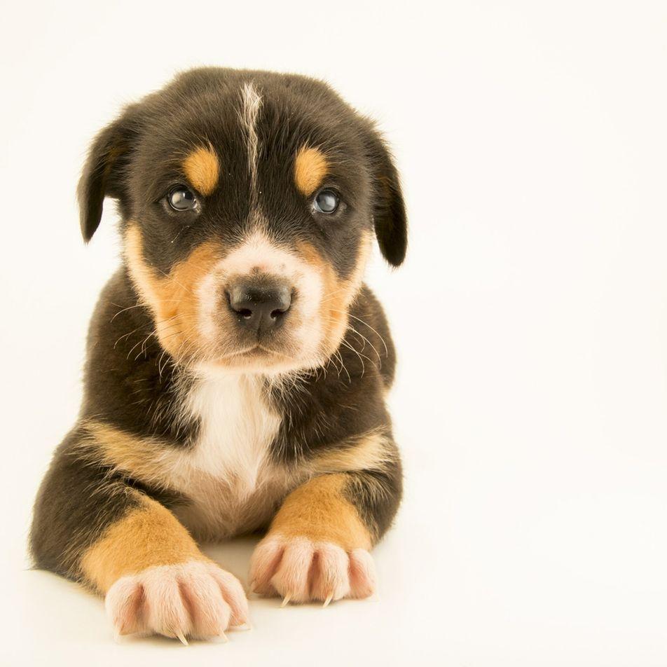 Como cães de busca e resgate encontram sobreviventes