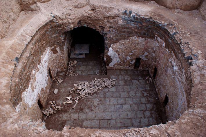 Ossos de animais contendo restos de jumentos foram descobertos por arqueólogos na tumba saqueada de Cui ...