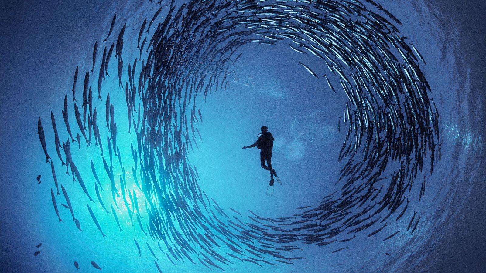 doubilet-redemoinho-barracudas