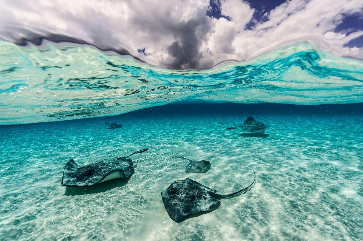 doubilet-raias-grand-caiman-ilhas-caiman