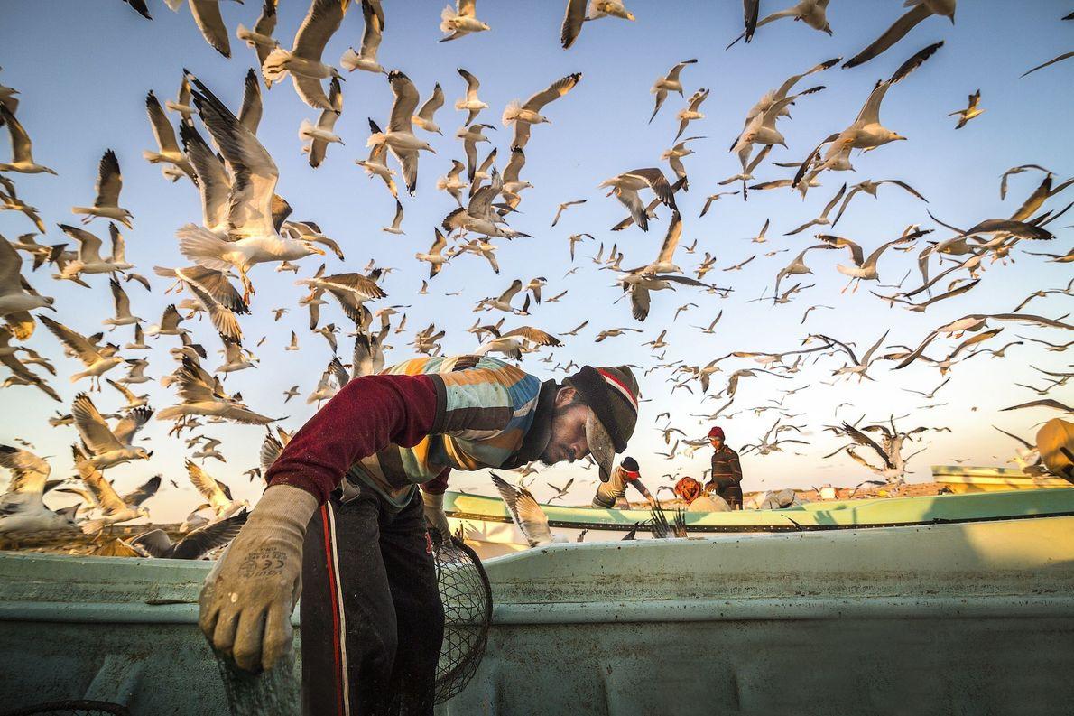 aves voando sobre barco