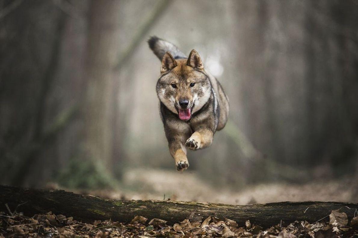 Corrida de saltos
