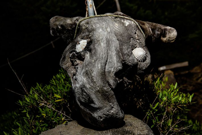 Morandi coleta troncos de zimbro e os molda em esculturas. Ele as vende para turistas e ...