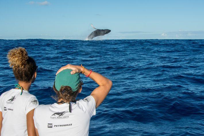 salto baleia-jubarte
