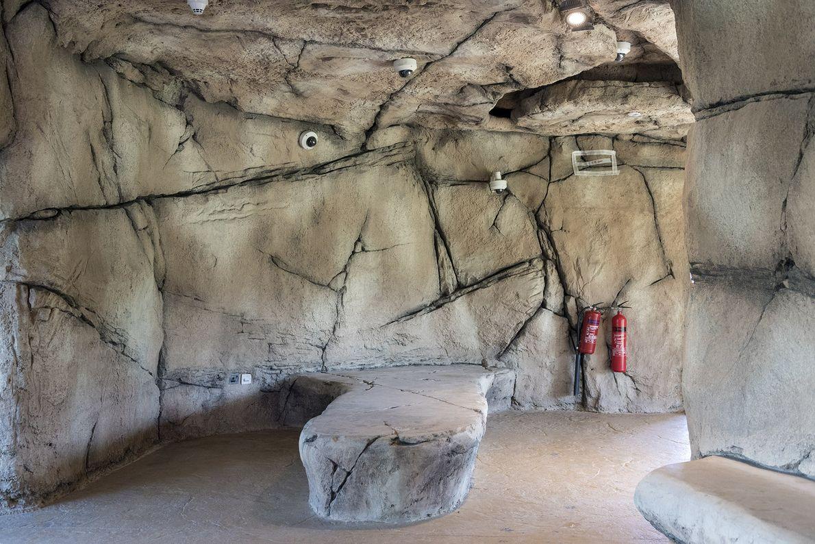 Câmeras de segurança foram posicionadas ao longo de uma gruta falsa no Dubai Safari Park.