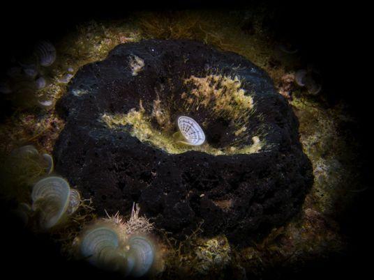 Fóssil de esponja de 890 milhões de anos pode ser o animal mais antigo já encontrado