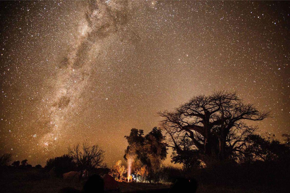 O Explorador da National Geographic Steve Boyes e sua equipe do Projeto Okavango Wilderness trabalham para ...