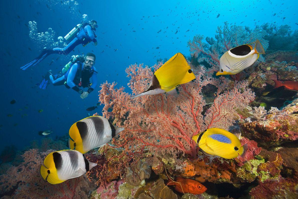 Dois mergulhadores exploram a Grande Barreira de Coral, localizada ao sul do Oceano Pacífico. Desde 2016, ...