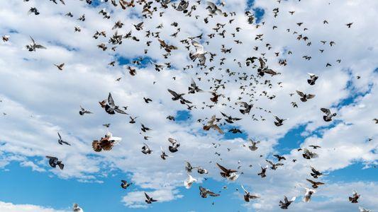 Quantas aves existem no mundo?