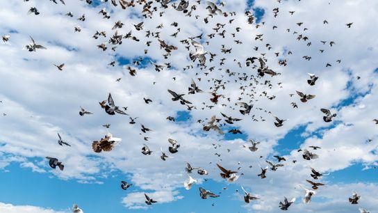 bird-population