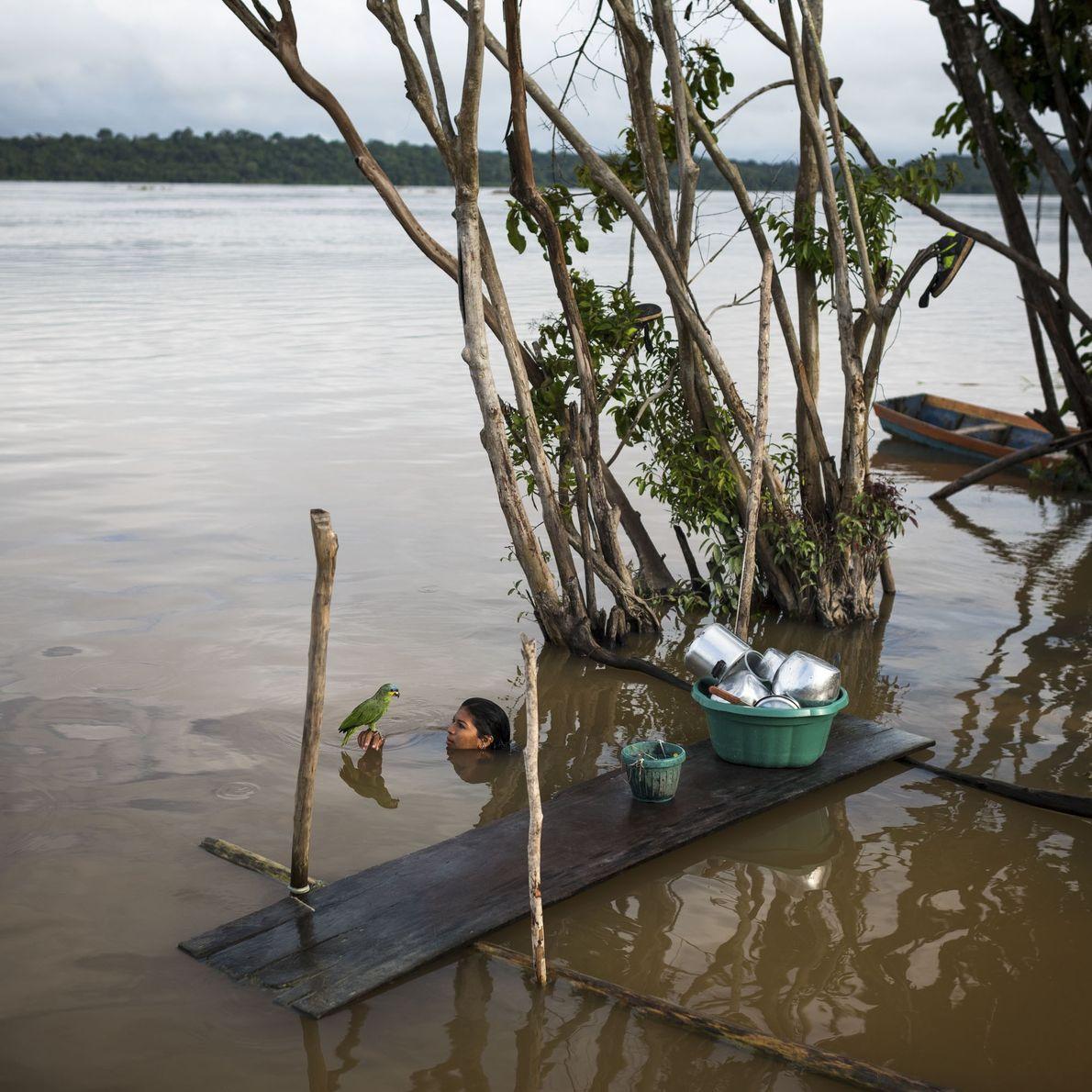 Lucicleide Kurap, da aldeia mundukuru Dace Watpu, em momento com seu periquito de estimação depois de …