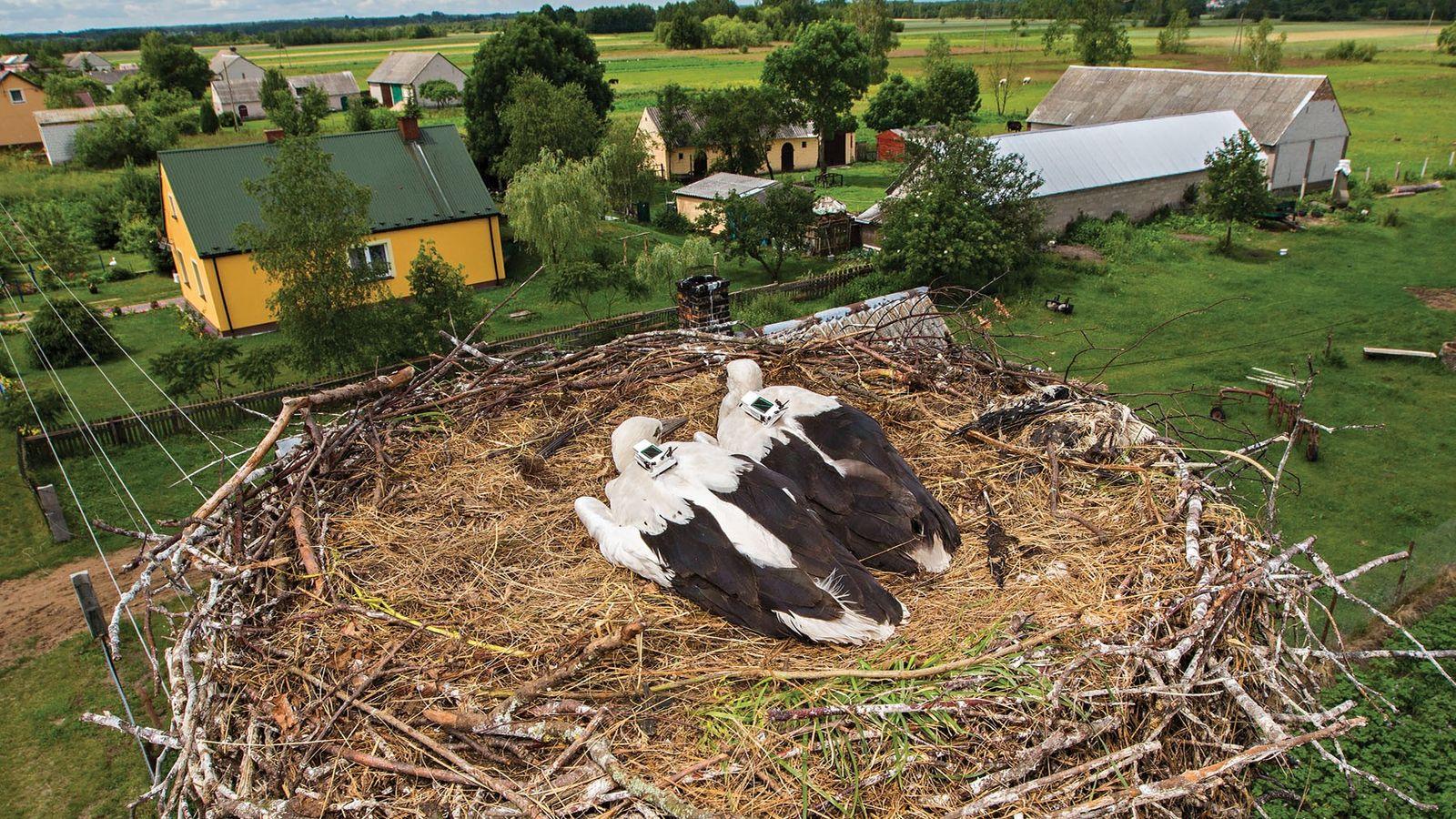 embarque-aves-terremotos