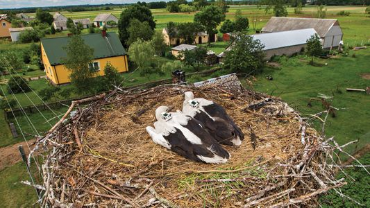 Poderiam as aves contribuir para o alerta antecipado de terremotos?