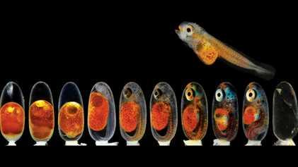 Fotos microscópicas revelam um mundo de pequenas maravilhas coloridas