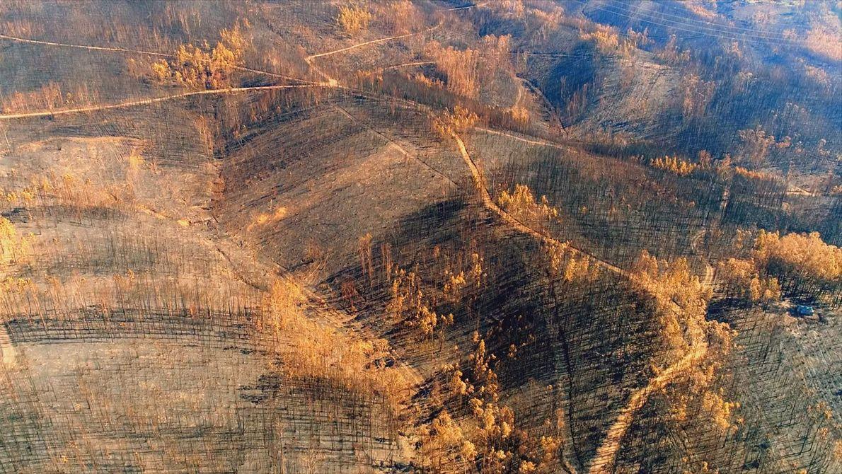 À Beira de um Desastre: O maior incêndio florestal de Portugal