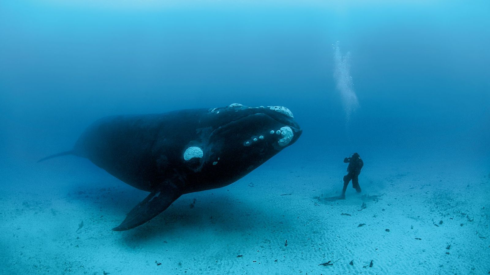 explorador-brian-skerry-baleia