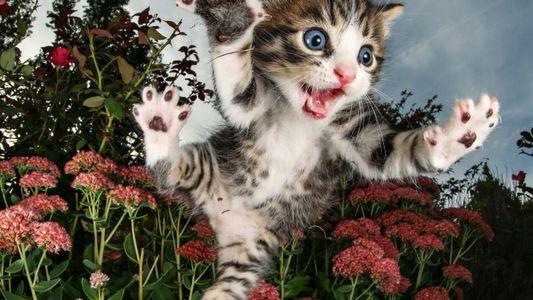 E se tudo o que sabemos sobre os gatos estiver errado?